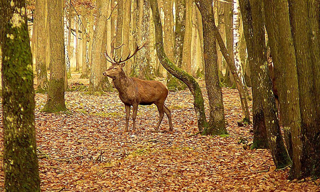 un cerf en forêt